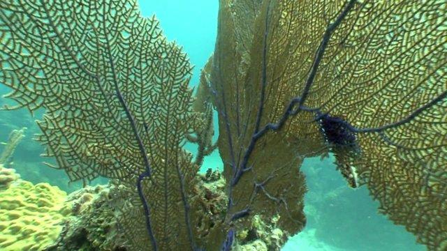 Pontos de Mergulho na Bahia
