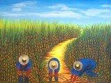 Uma plantação de cana-de-açúcar.