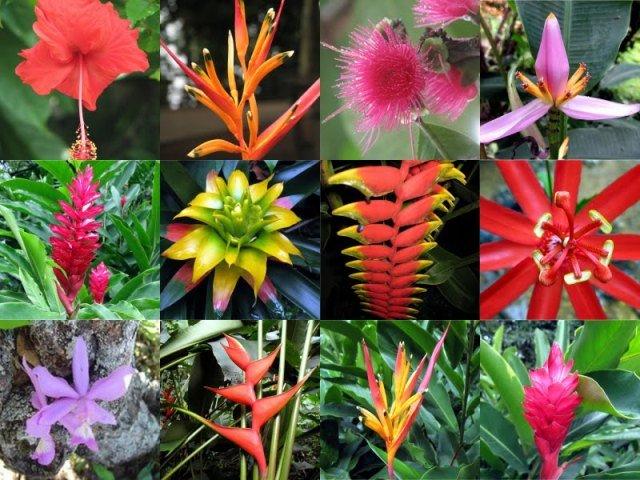 plantas jardim nordeste:As flores tropicais de beleza exuberante vão enfeitar muitas festas