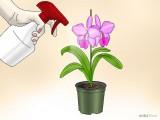 Regando e Alimentando as orquídeas - cuidar e cultivar orquídeas