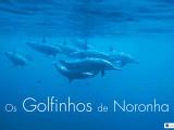 Fernando de Noronha possui a maior concentração de golfinhos do planeta