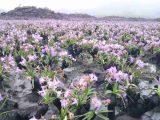 Candombá é flor típica do Parque Nacional da Chapada Diamantina