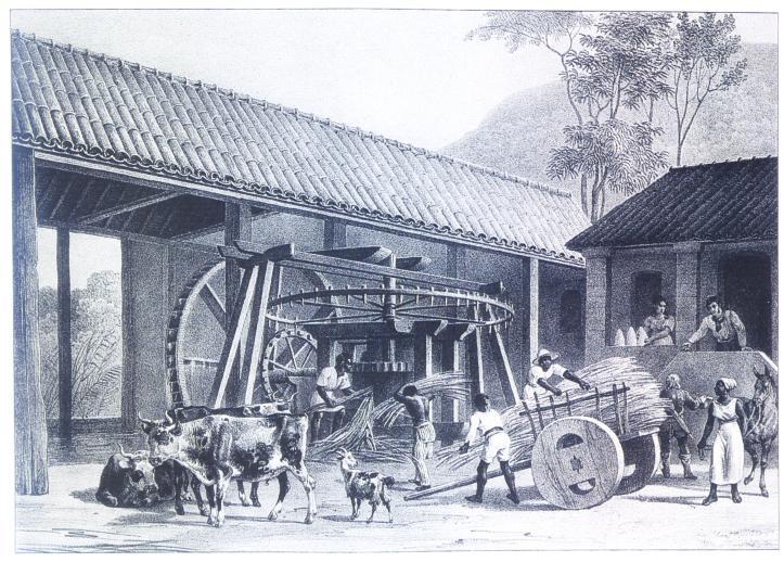 História da cana-de-açúcar na colonização do Brasil