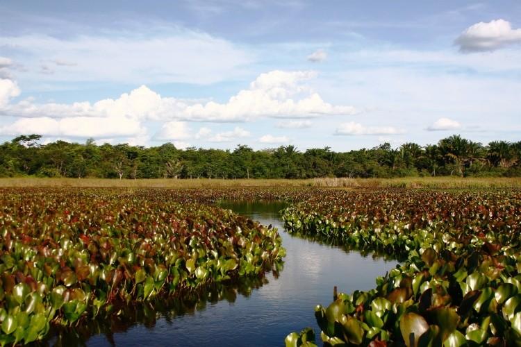 Guia Turismo do Pantanal Baiano que é um verdadeiro santuário