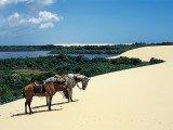 Ilha do Cajú