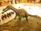 Museu de Paleontologia Santana do Cariri