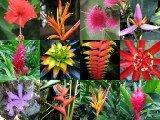 Flores tropicais nordeste do Brasil