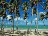 Praia de Pititinga - Rio do Fogo RN
