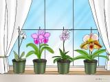 Orquídeas na janela - Cultivar e Cuidar de Orquídeas