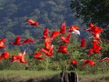 Floresta dos Guarás no Maranhão