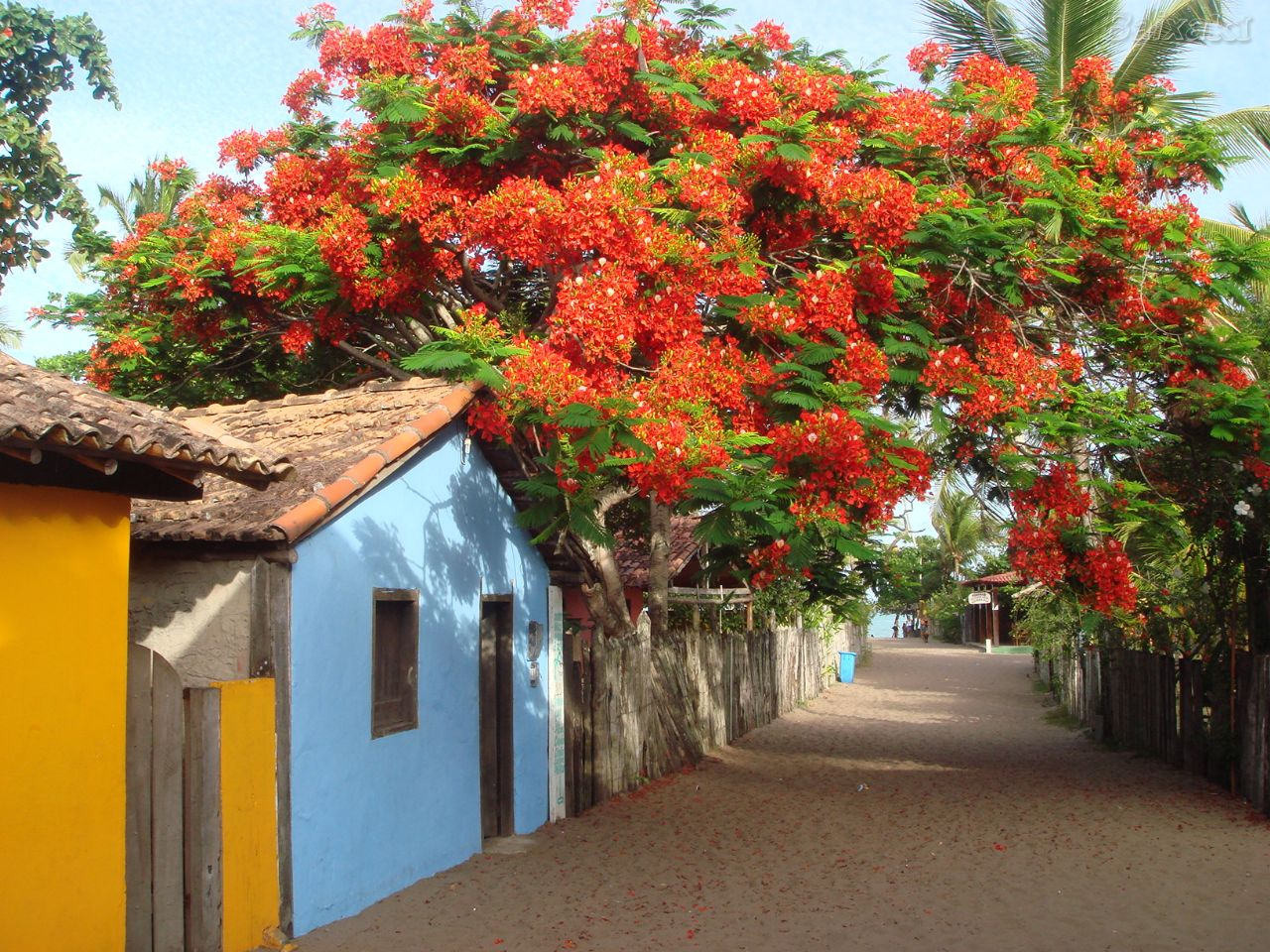 Caraíva tem lindas praias intocadas e contrasta com o verde da mata atlântica