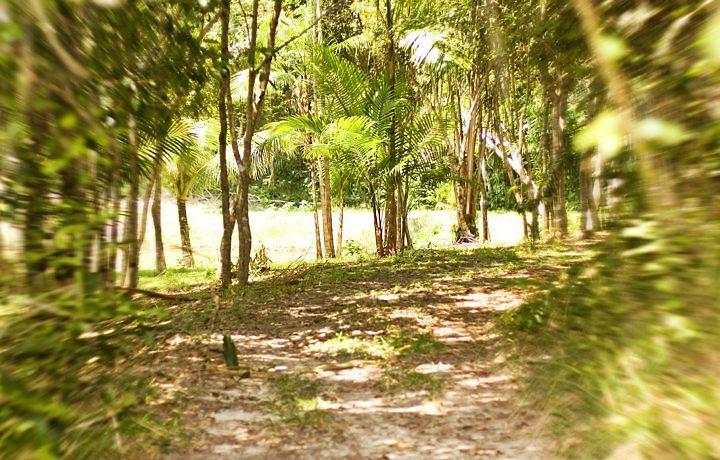 Ecoturismo no Parque Sauípe na Bahia