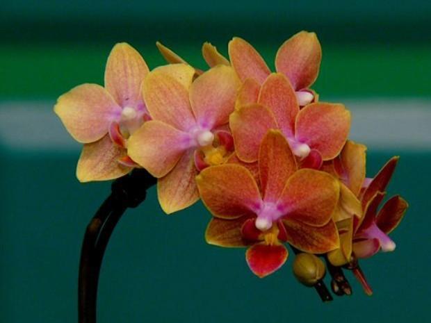 Produtor de orquídeas coleciona mais de 300 espécies em Recife
