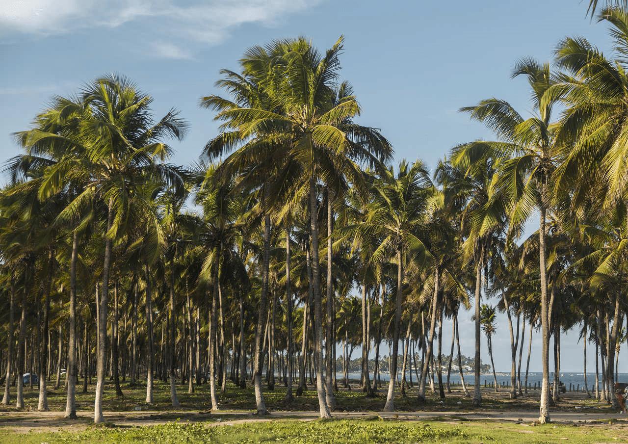 Maracaípe em Pernambuco
